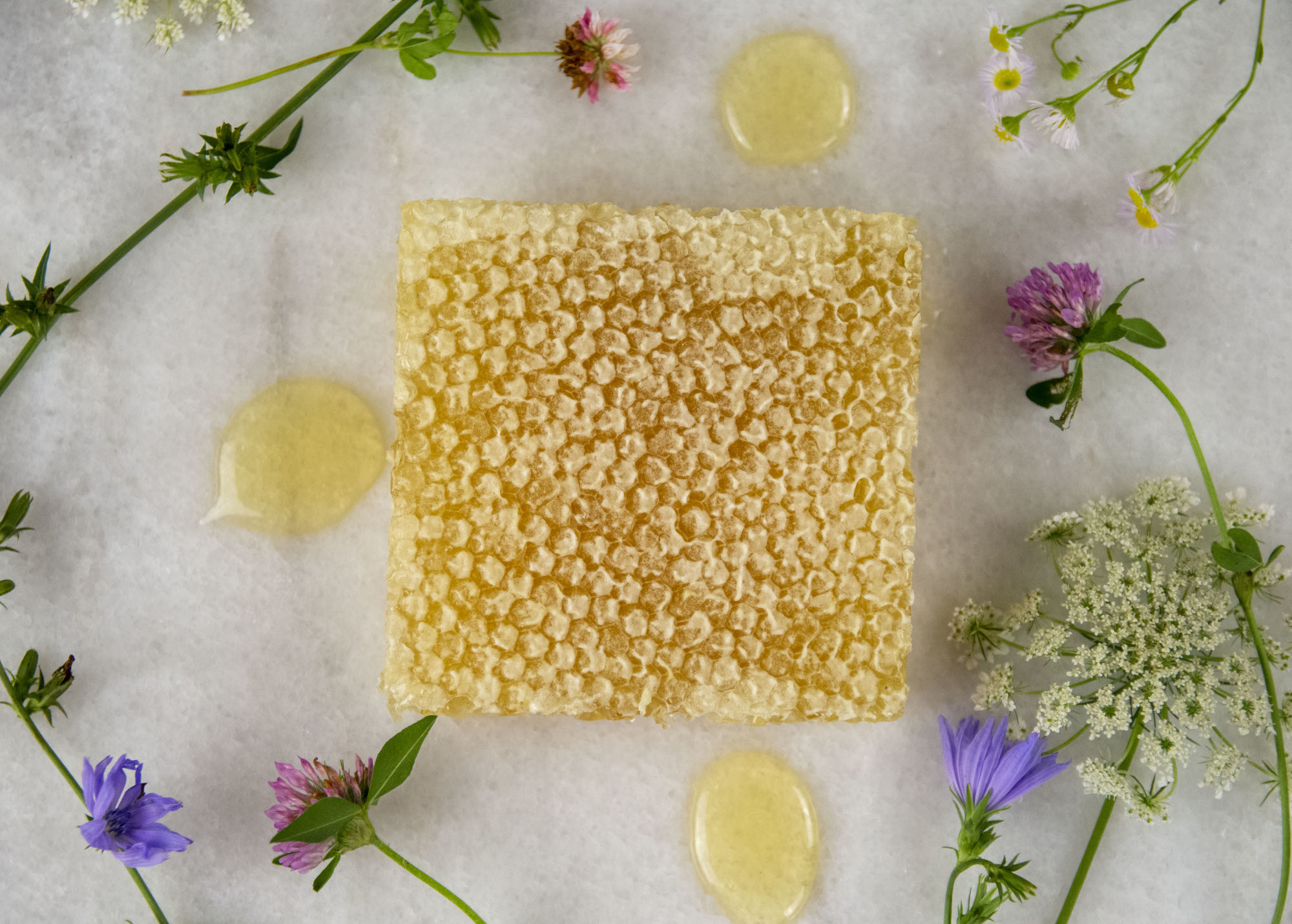 Honey Comb And Flowers